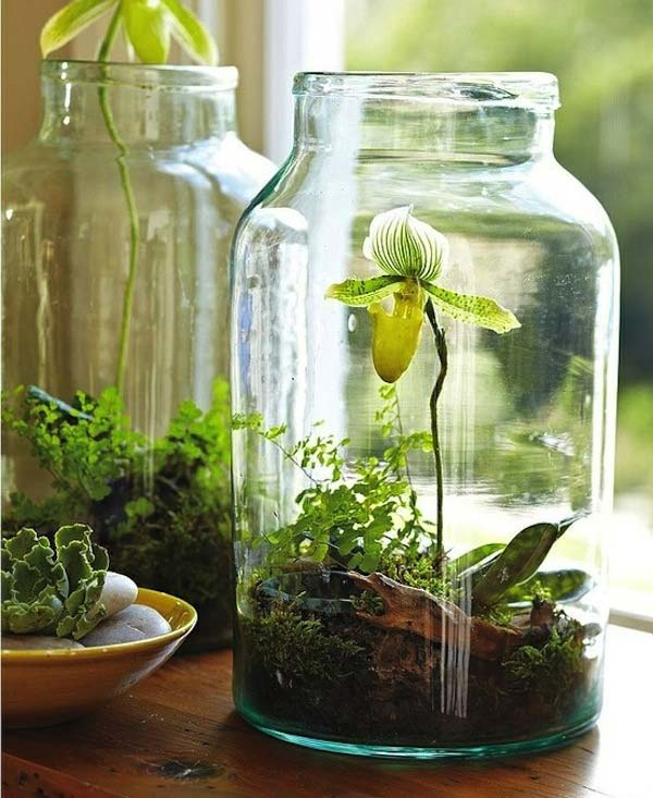 Indoor Gardens DIY Glass Jar Terrarium with Moss and Orchid