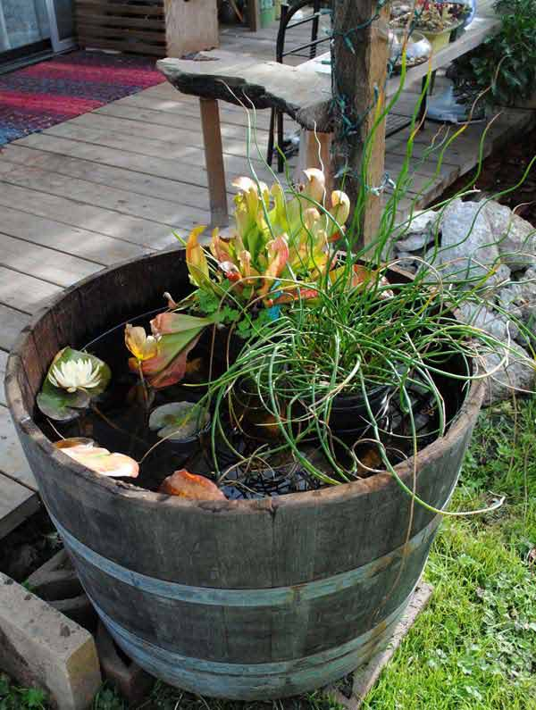21 Fascinating Low Budget Diy Mini Ponds In A Pot