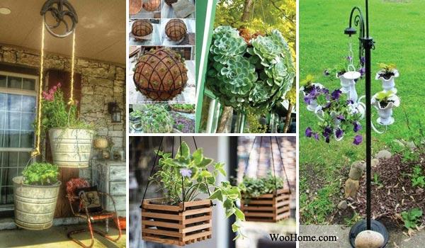 Hanging Plants Ideas