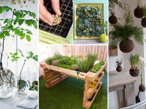 mini indoor garten top  awesome ideas to display your indoor mini garden