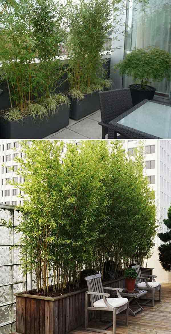 Evergreen Hedges Zone 7