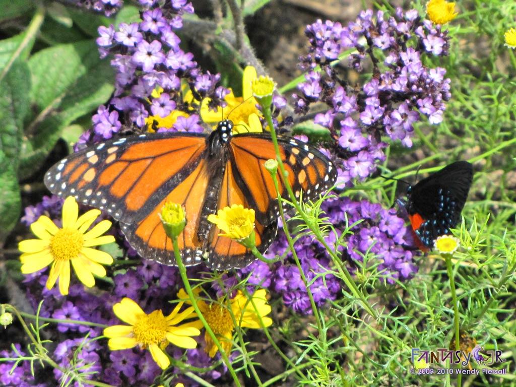 Butterfly Purple Yellow 102