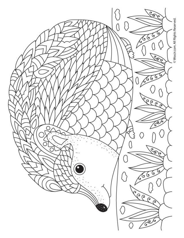 Hedgehog Adult Coloring Page  Woo! Jr. Kids Activities