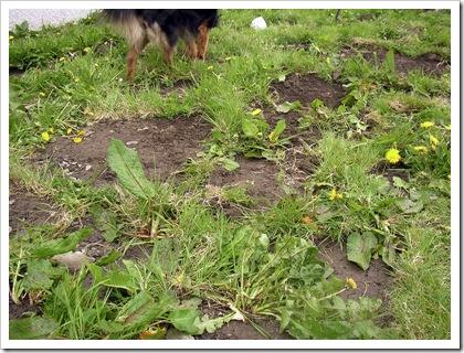 more-weeds