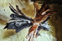 Feathers hung in the mantle