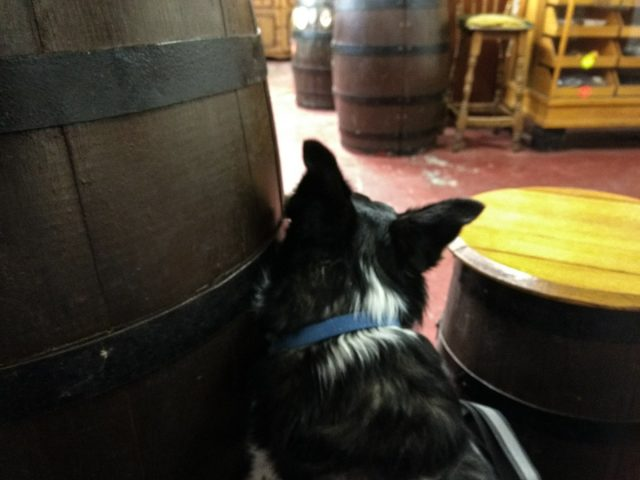 Nell was well-behaved in the Taps, reserved but curious