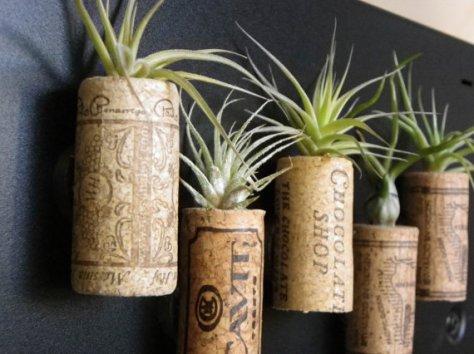 kurken met air plants