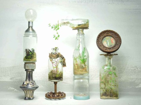 sea plants in a bottle