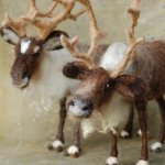#christmas countdown dag 24: don't eat the reindeer