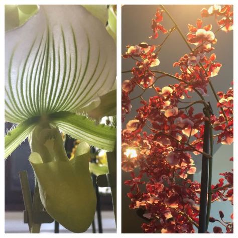 maand van de orchidee