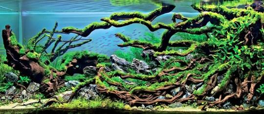 Arbol con arbustos dentro de pescera