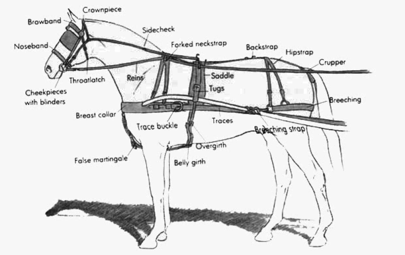 Wagon Harness