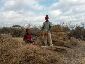 Two Kenyan people cutting mulch to help a permaculture garden grow