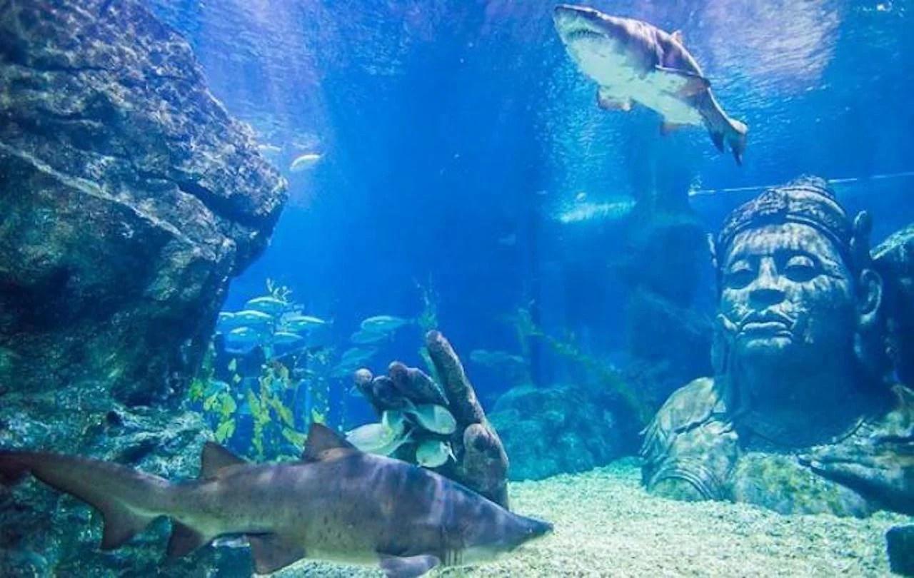 Ocean Life Bangkok Ocean World