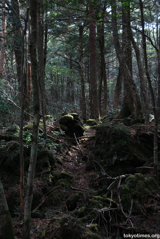 https://i1.wp.com/www.wordpress.tokyotimes.org/archives/aokigahara02.jpg