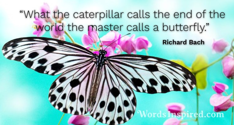Image result for richard bach butterfly quote