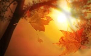 Beautiful-Autumn-Leaves