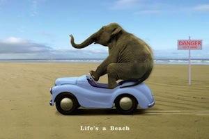 Elephant-lifes-a-beach-poster