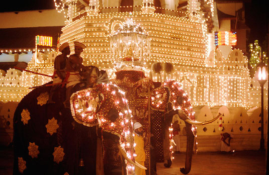 A Decorated Elephant in the Sri Lankan Diwali Celebrations | How Diwali Is Celebrated Outside India