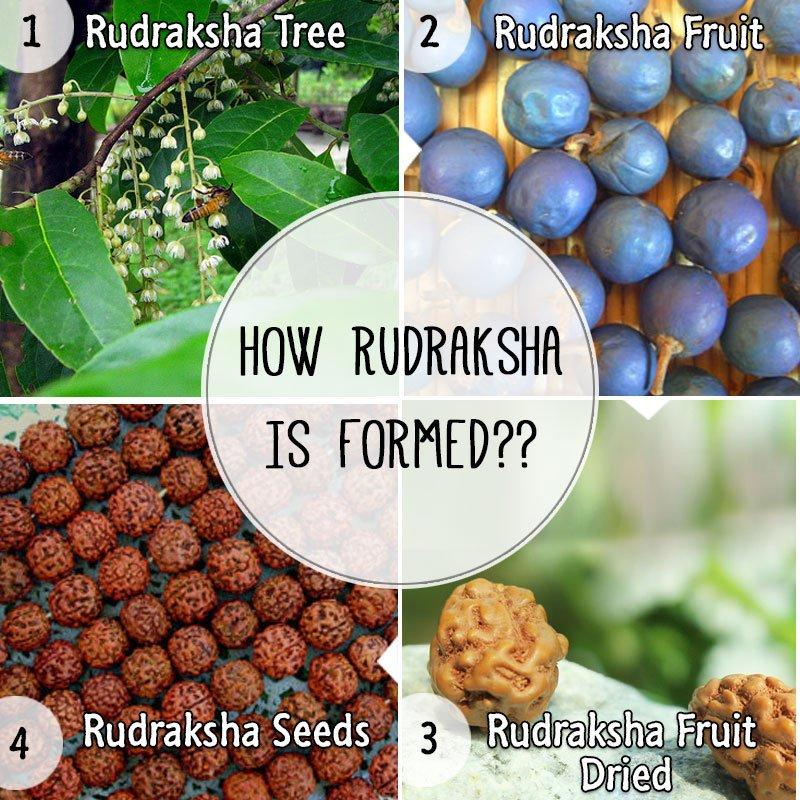 rudrakha-formation