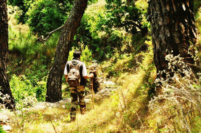 Trek in the jungle trails and spot the myriad wildlife of Binsar