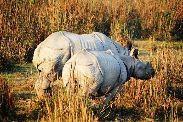 Dibru Saikhowa National Park in Assam
