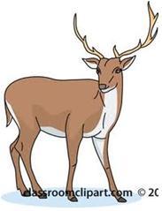 Deer 1 - Stochastic Probability Theory - Pregnant Deer Scenario