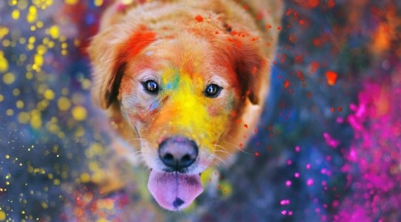 cute holi pictures with dogs