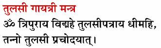 Tulsi Gayatri Mantra Hindi