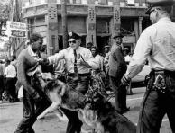 police_dogs_0115