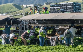 Workers compensation attorney - Farm Workers