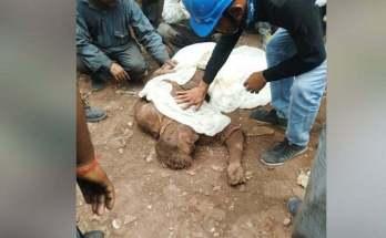 iffco accident burnt body 1