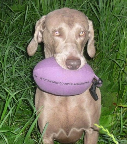 Aya with her brand new Purple Pheasant Dummy Sent in by Cheryl H