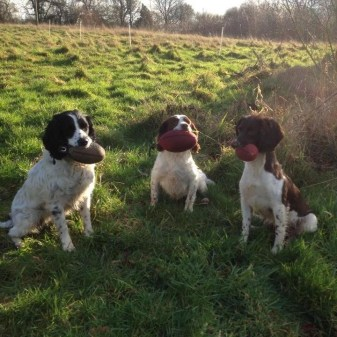 Springers showing off Partridge, Pheasant and Woodcock dummies Sent in by Rob