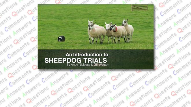 Cover image for our sheepdog trials tutorial comments page