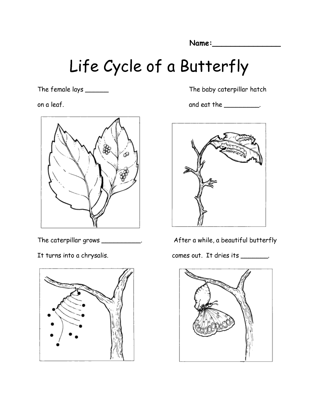 Life Cycle Of A Butterfly Printable Book