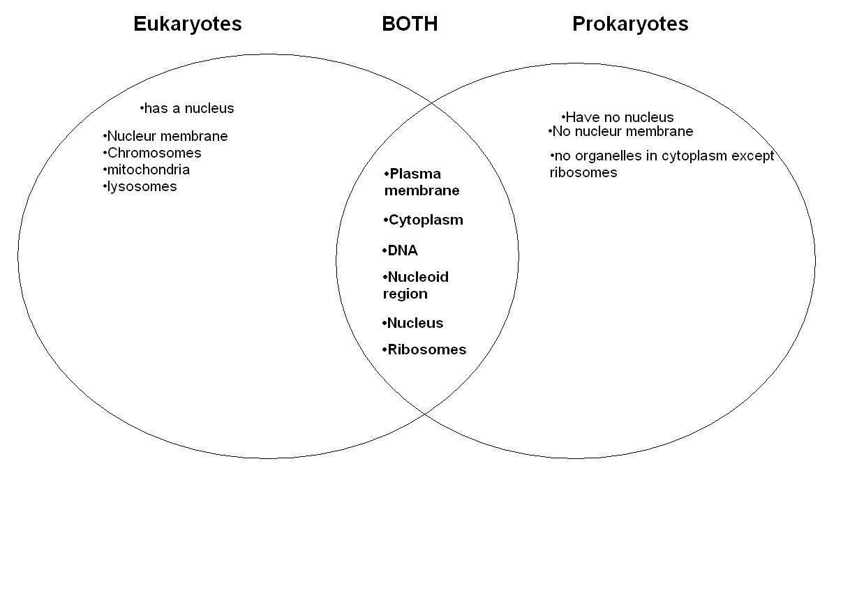 12 Best Images Of Prokaryotic Vs Eukaryotic Cells