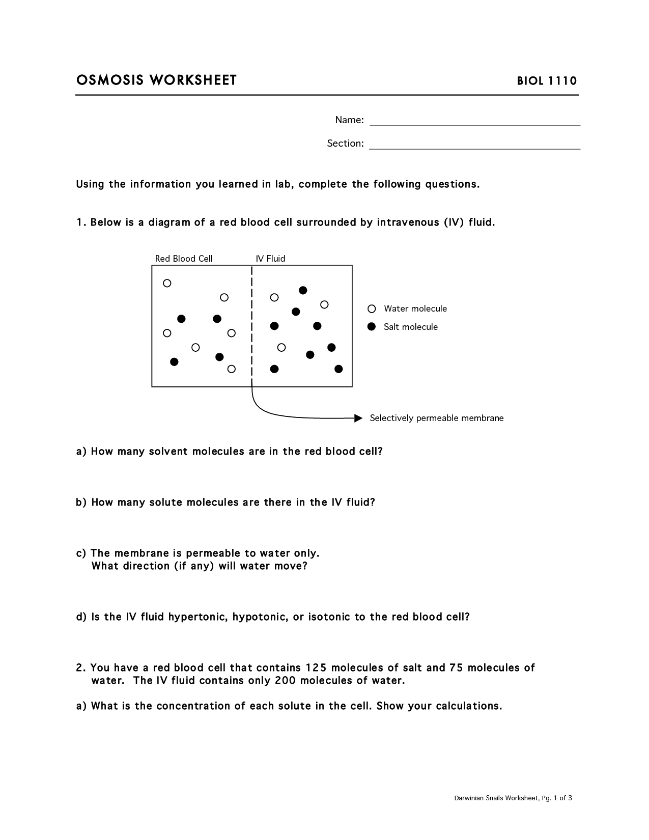 13 Best Images Of Cell Transport Worksheet Answer Key