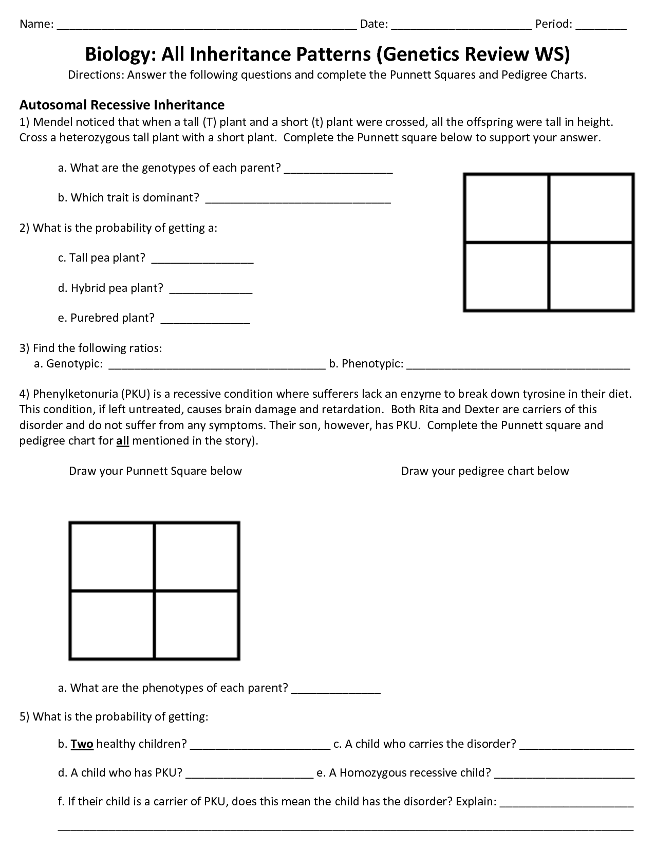 11 Best Images Of Genetics Review Worksheet Answers