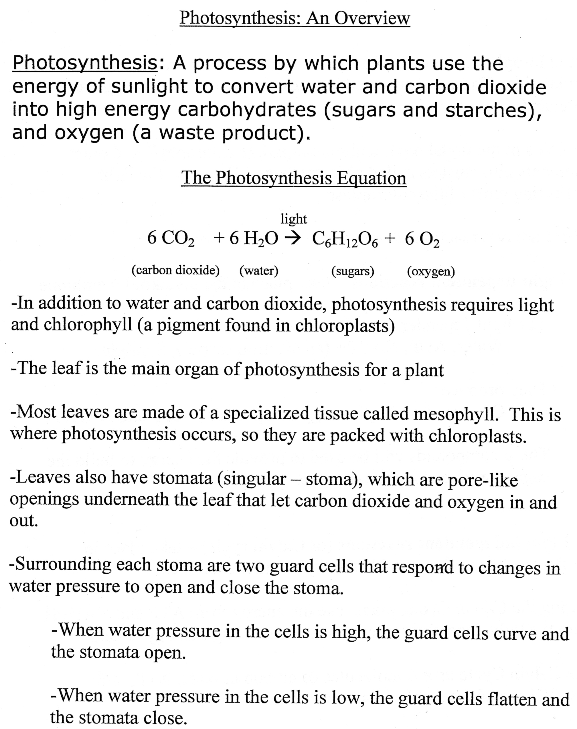 Photosynthesis Worksheet Answers Key