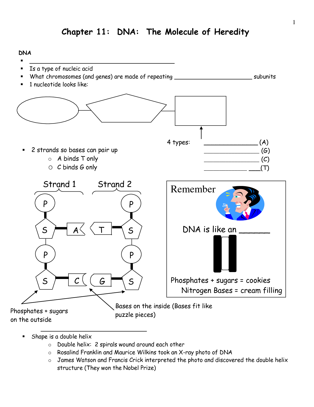 Chapter 12 Worksheet Structure Of Dna And Replication