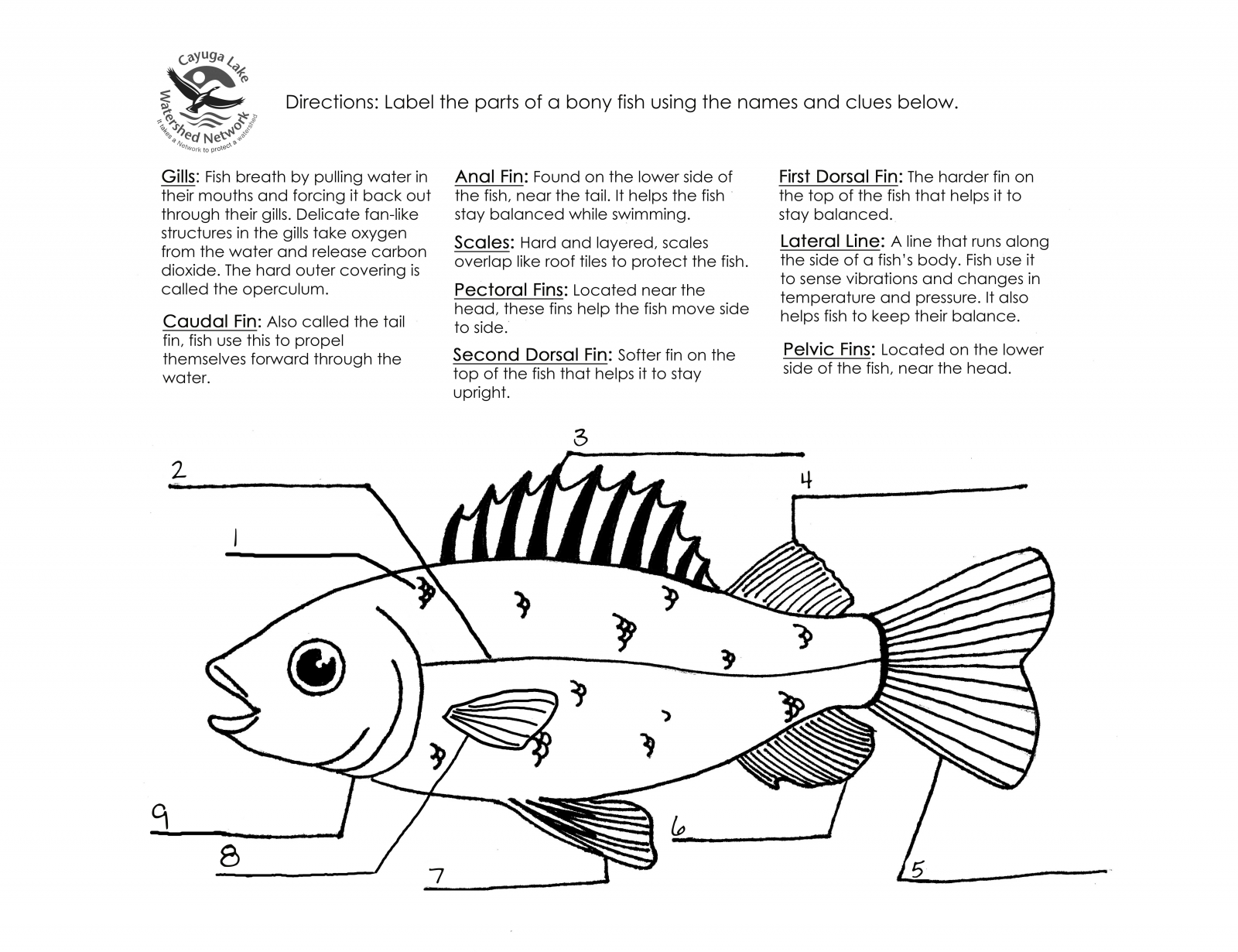 9 Best Images Of Parts Of A Fish Worksheet