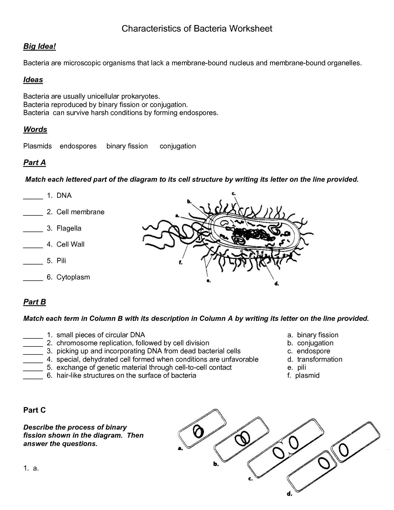 Worksheet On Bacteria Webquest