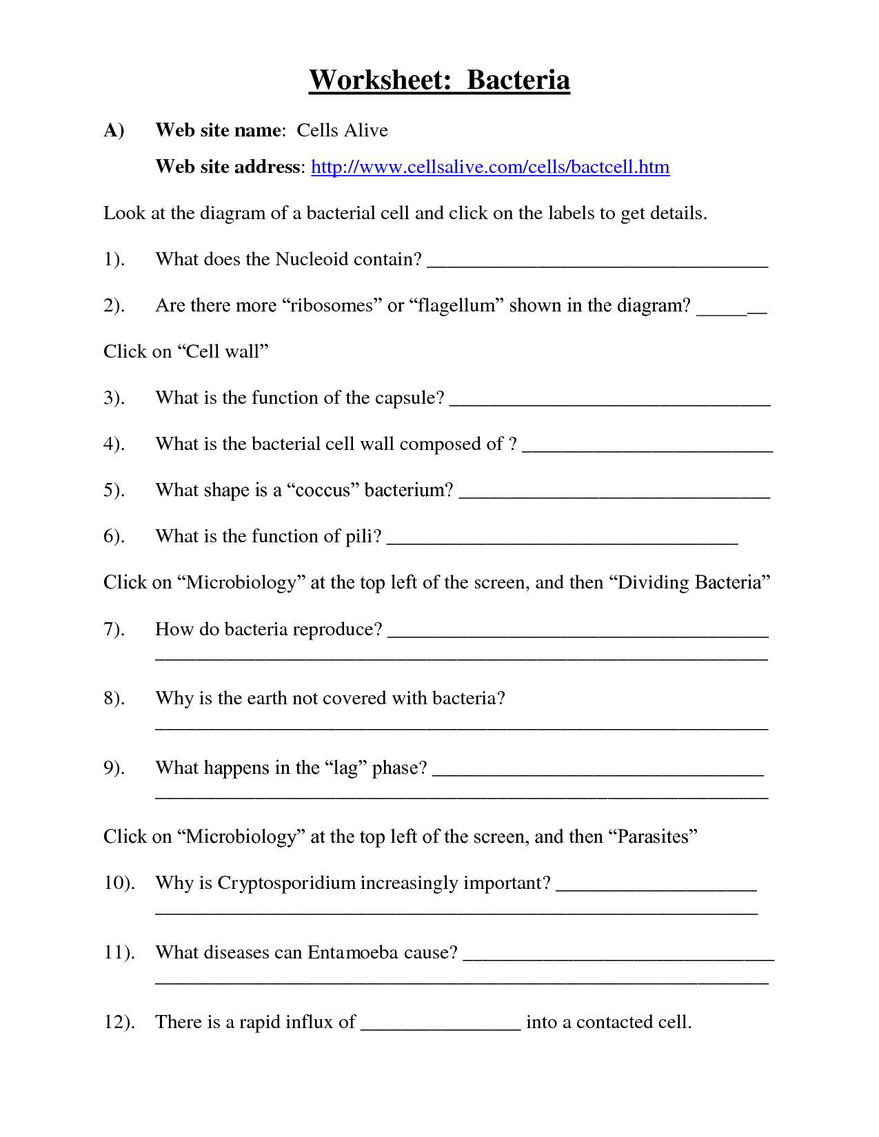 Amazing Characteristics Of Bacteria Worksheet Free