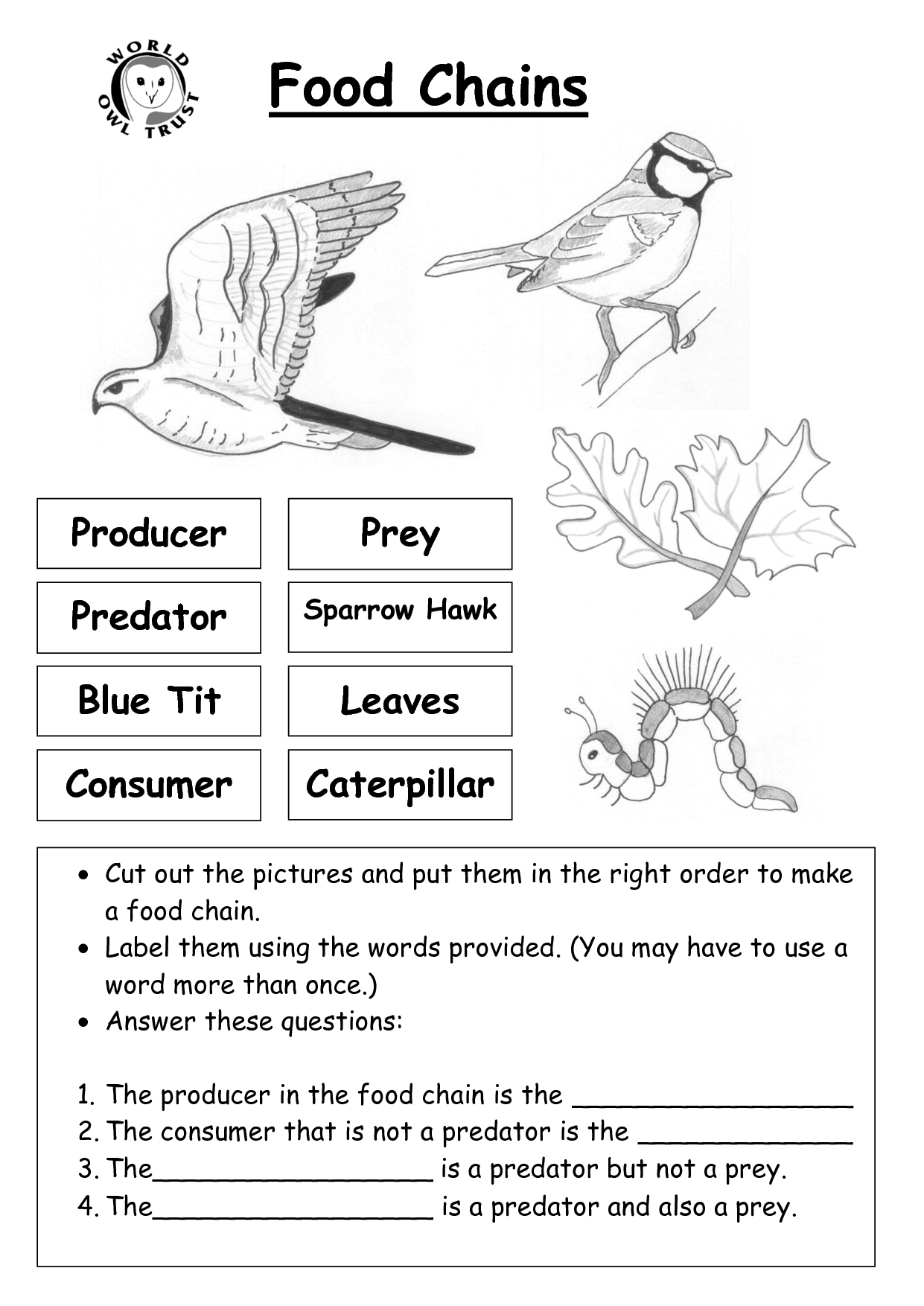 Food Web Worksheet For Kindergarten