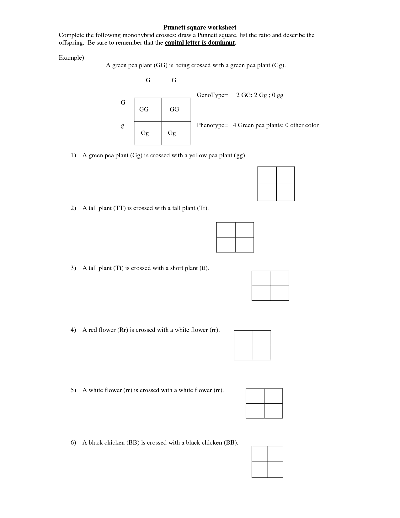 Polygenic Punnett Square Worksheet