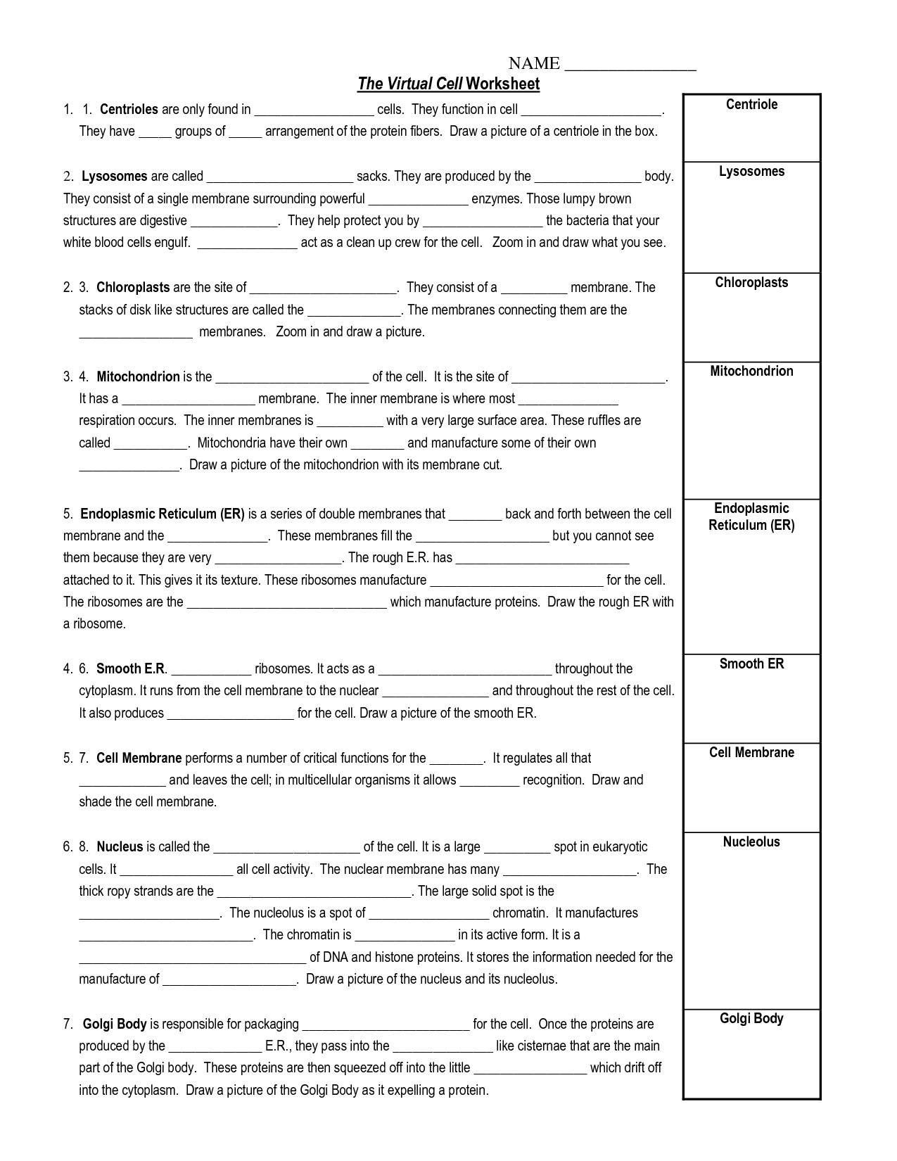 14 Best Images Of Cell City Worksheet