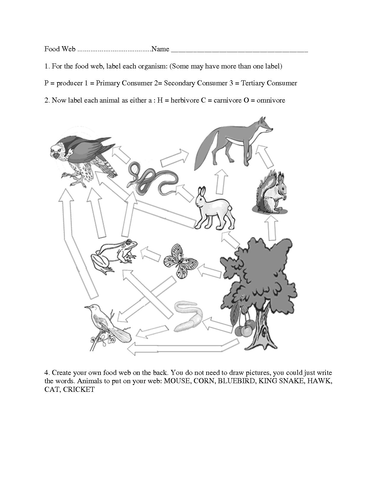 Food Web Worksheet Middle School