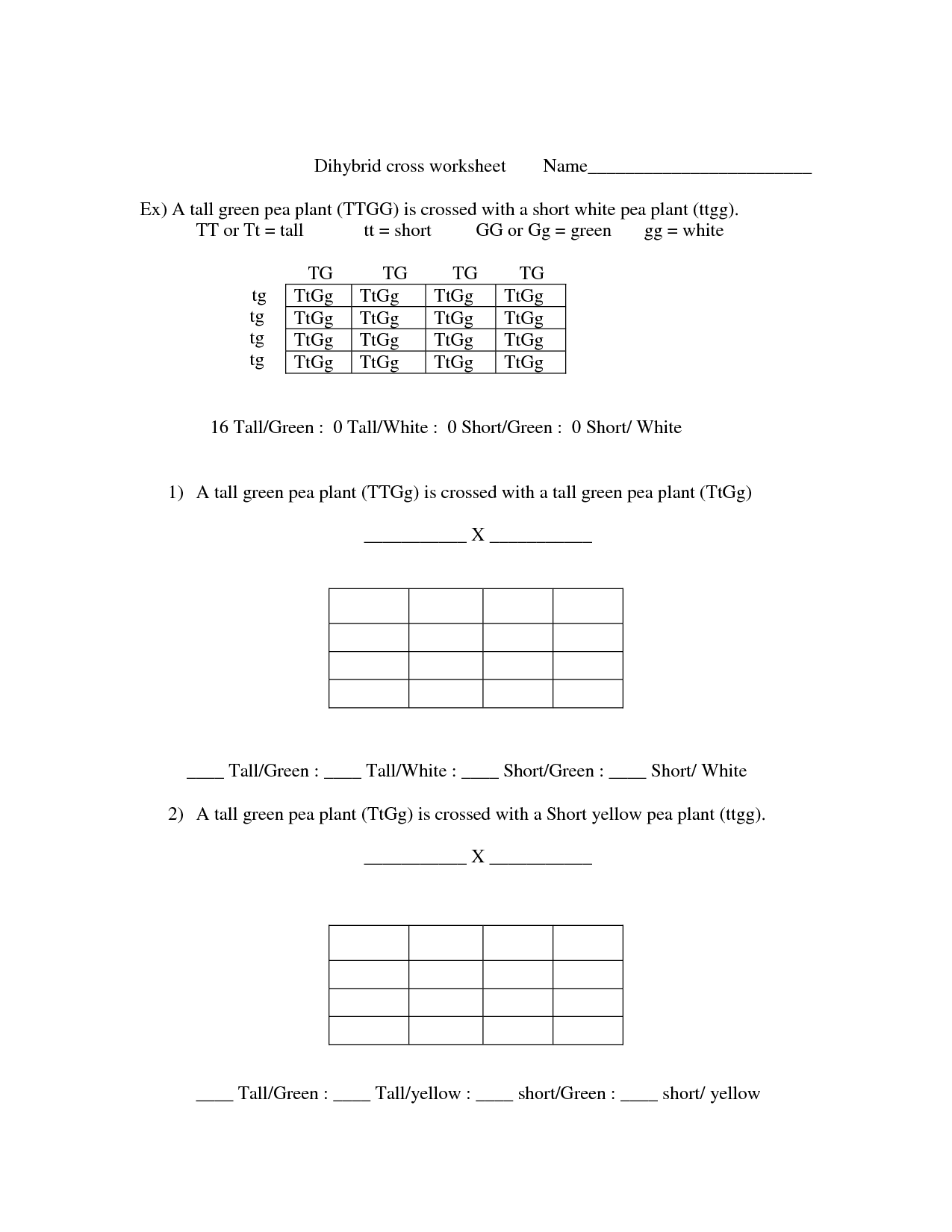 Worksheet Dihybrid Cross Worksheet Answer Key Worksheet Fun Worksheet Study Site