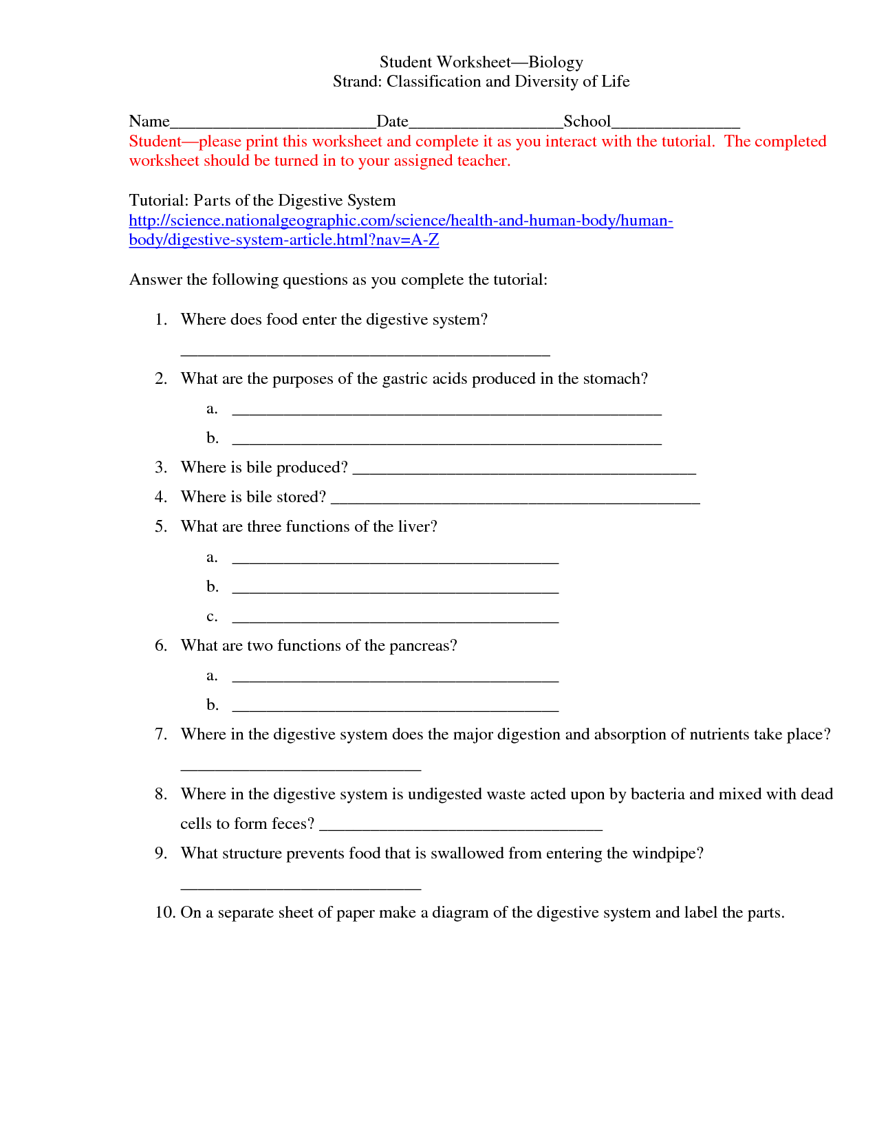 Classification Worksheet Year 6